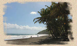 beach of Grande Anse, Trois Rivieres, Guadeloupe